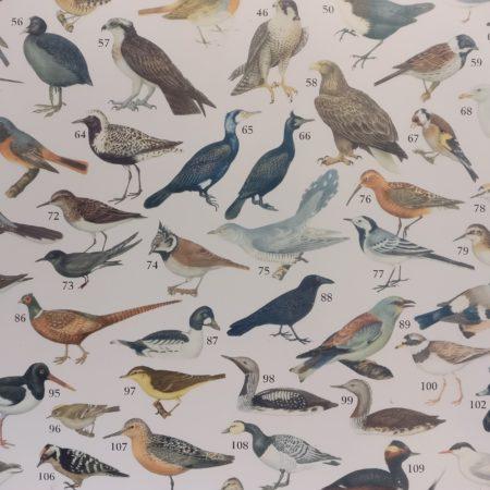 Trädgårdsfåglar, Sverige